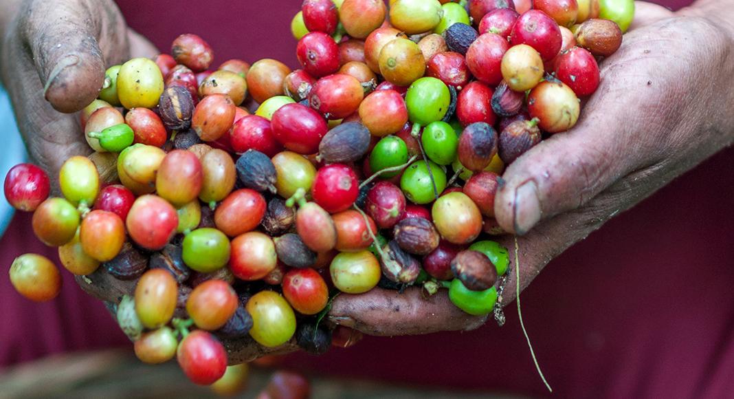 6 Best Organic Coffee Beans