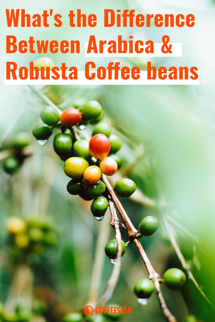 What's the Difference Between Arabica vs Robusta Coffee Beans