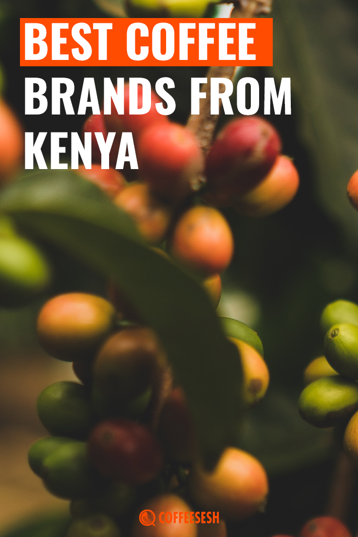 Coffee Insight: Best Coffee Brands from Kenya