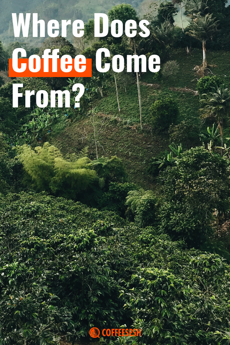 Coffee Basics: Where Does Coffee Come From?