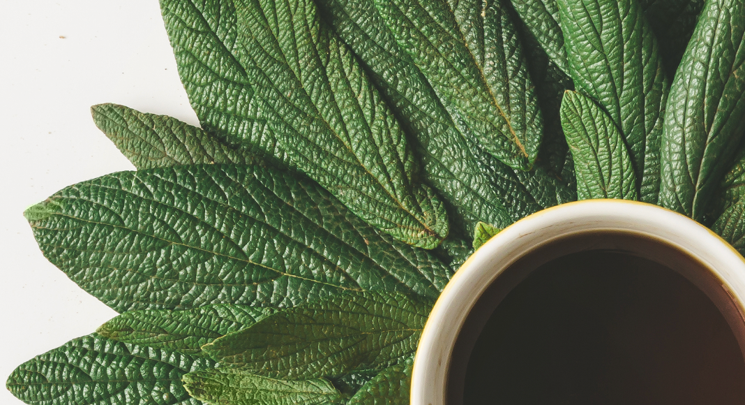 Definitive Guide to Coffee Antioxidants