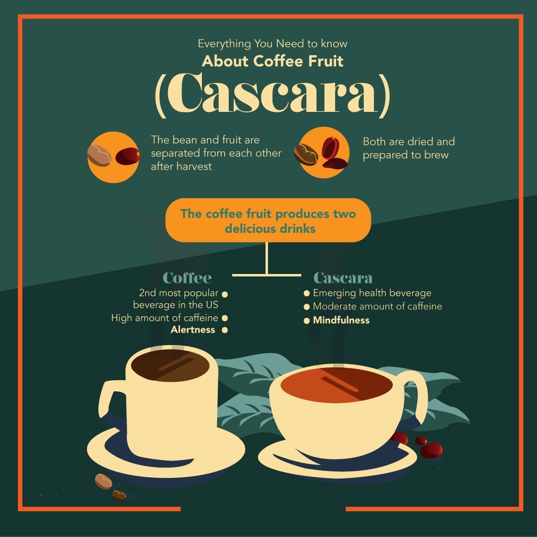 Everything You Need to Know About Coffee Fruit Cascara