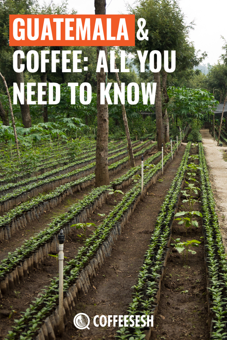 Guatemala & Coffee: All You Need to Know